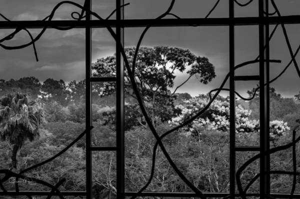 Photograph - Disney Animal Kingdom Lodge II by Susan Molnar