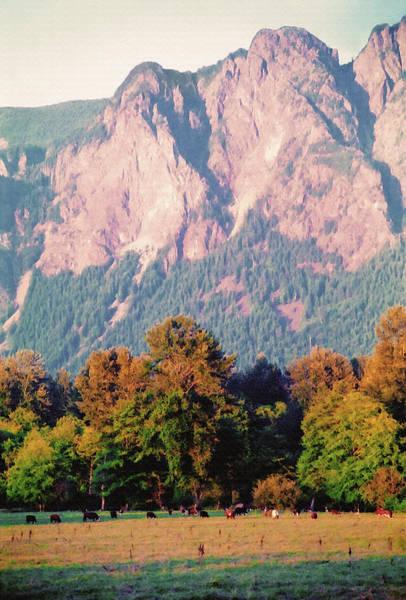 Distant Cattle Grazing Beneath Cascade Mountains 2 Art Print
