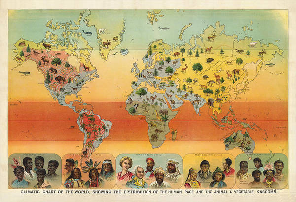 Distribution Drawing - Distribution Of The Human Race - Ethnographic Chart - Historic Chart - Old Atlas - Climatic Chart by Studio Grafiikka