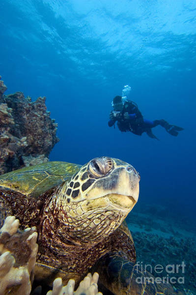 Free Dive Wall Art - Photograph - Diver And Green Sea Turtl by Dave Fleetham - Printscapes