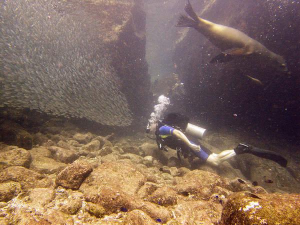 Photograph - Diver And Sea Lion by Matt Swinden