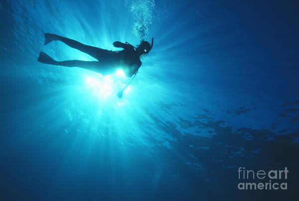 Free Dive Wall Art - Photograph - Diver On Mahi Wreck by Bob Abraham - Printscapes