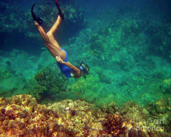 Photograph - Diving For Shells by Bette Phelan