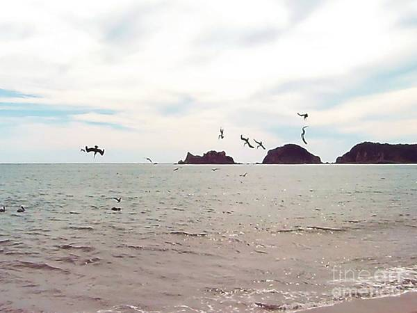 Photograph - Diving by Victor K