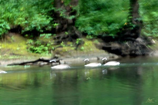 Photograph - Dix River Wild Geese by Sam Davis Johnson