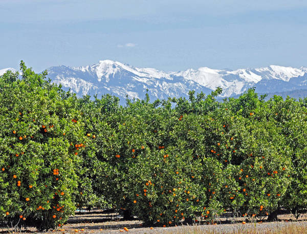 Photograph - Dm6850-e Orange Grove And The Sierra Nevada Ca by Ed Cooper Photography