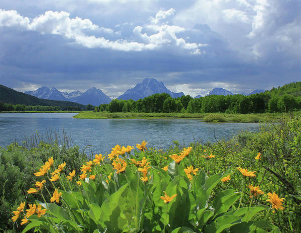 Photograph - Dm9235 Mt. Moran From Oxbow Bend by Ed Cooper Photography