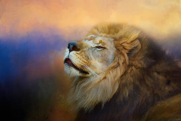 Photograph - Do Lions Go To Heaven? by Jai Johnson