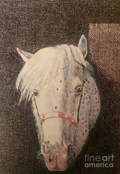 Appaloosa Drawing - Do You See Spots by Lori Moon
