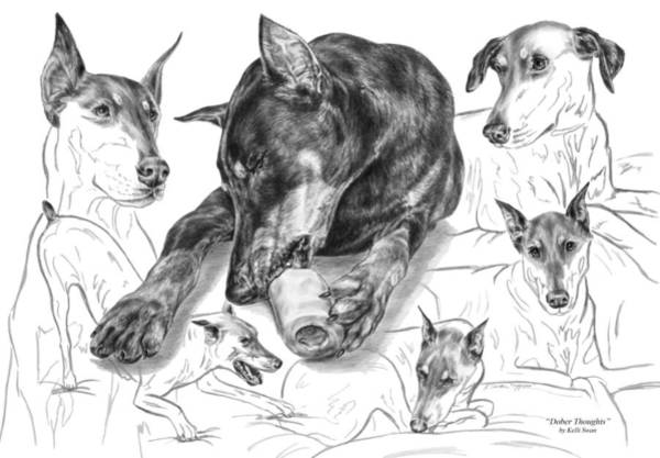 Drawing - Dober-thoughts - Doberman Pinscher Montage by Kelli Swan