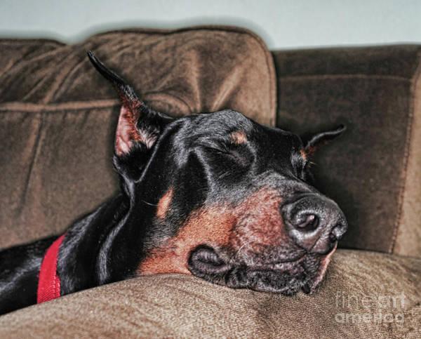Doberman Photograph - Doberman Pinscher Dog Tired by Paul Ward