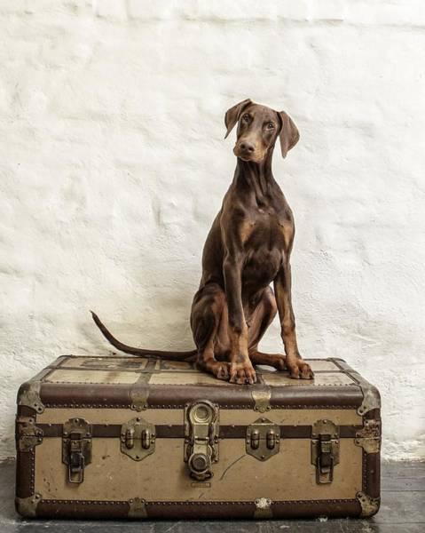 Doberman Photograph - Doberman Pinscher Puppy by Wolf Shadow Photography