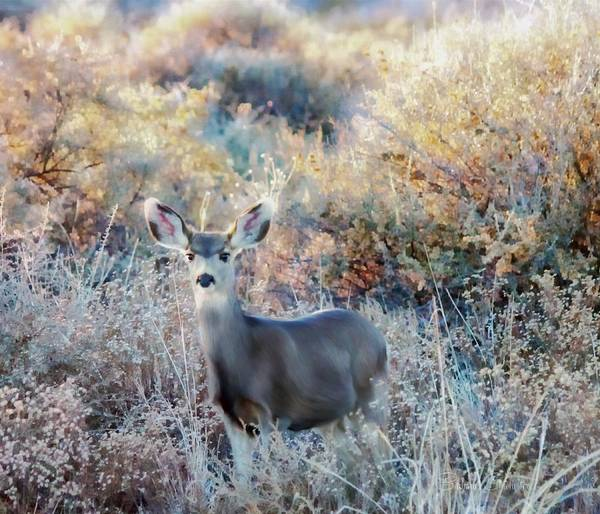 Woodland Animals Mixed Media - Doe At Dusk Bosque Del Apache by Barbara Chichester