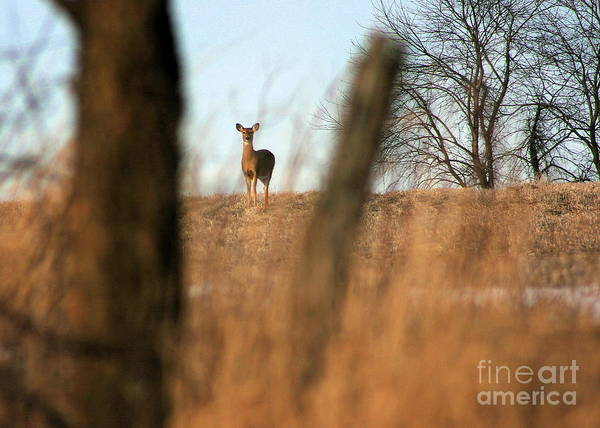 Photograph - Doe In Autumn by Angela Rath