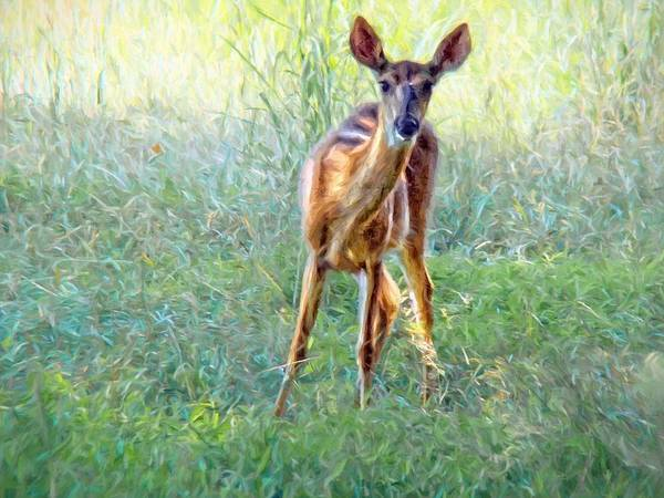Photograph - Doe In The Green Grasses by Alice Gipson