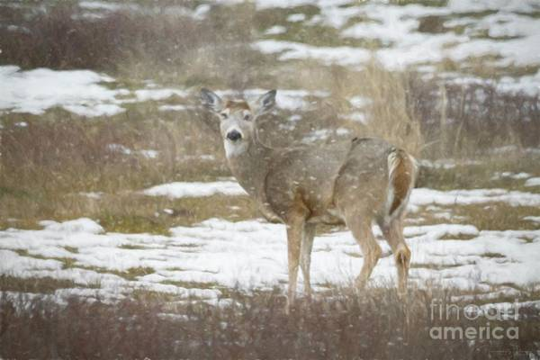Photograph - Doe In The Snow 2 by Teresa Wilson