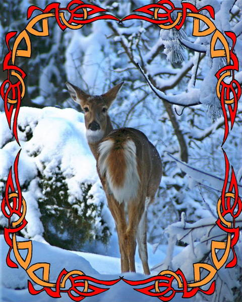 Photograph - Doe In The Snow by Ben Upham III