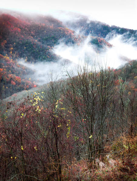 White Tailed Deer Photograph - Doe On Autumn Ridge by Karen Wiles