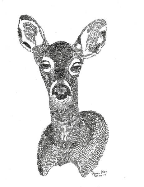 White Tailed Deer Drawing - Doe by Ronnie Maum