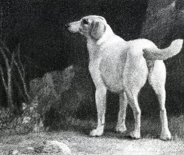 Dog, 1788 Art Print