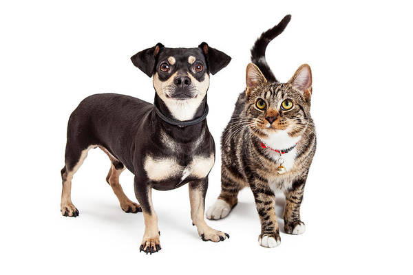 Crossbreed Wall Art - Photograph - Dog And Cat Standing Looking Up Together by Susan Schmitz