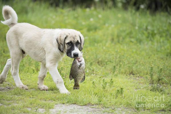 Wall Art - Photograph - Dog Gone Fishing by Juli Scalzi