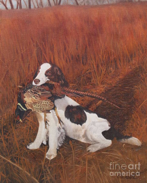 Field Spaniel Painting - Dog And Pheasant by Barbara Barber