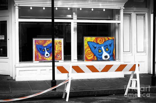 Wall Art - Photograph - Dog Art Fusion by John Rizzuto