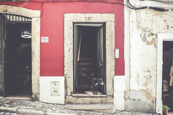 Wall Art - Photograph - Dog At The Door by Andre Goncalves