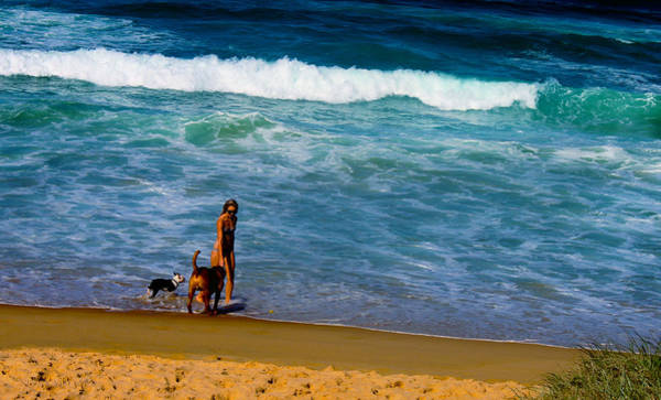 Photograph - Dog Beach by Susan Vineyard