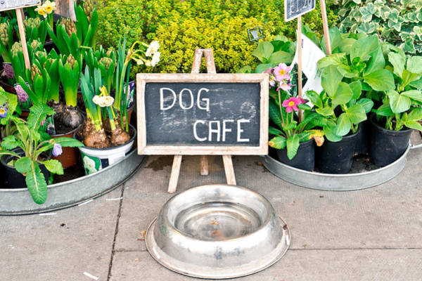 Sidewalk Cafe Photograph - Dog Cafe by Tom Gowanlock