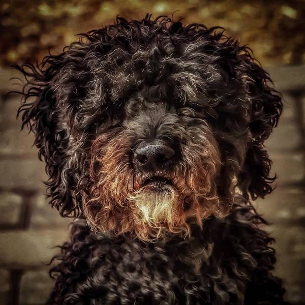 Photograph - Dog  by Cliff Norton