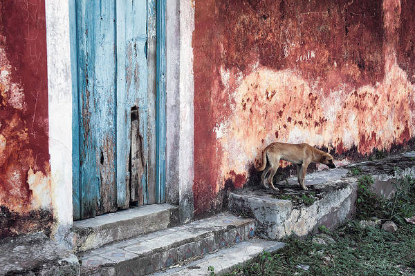 Photograph - Dog Days Of Mexico by Renee Sullivan