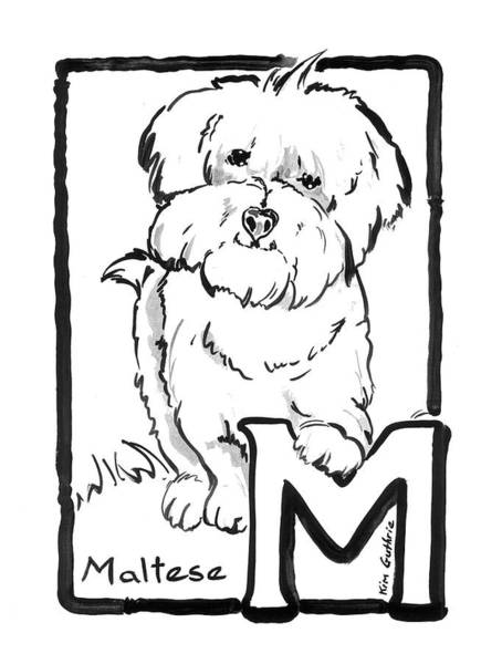 Wall Art - Painting - Dog Drawing Maltese And The Letter M by Kim Guthrie