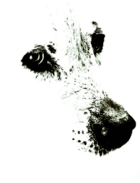 Wall Art - Painting - Dog Face by Frank Tschakert