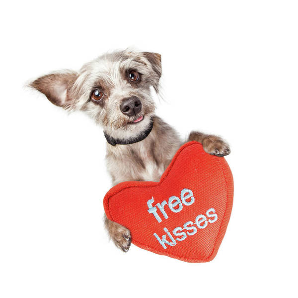 Wall Art - Photograph - Dog Free Valentines Day Kisses by Susan Schmitz