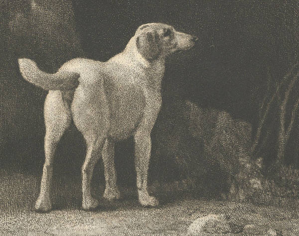 Relief - Dog  by George Stubbs