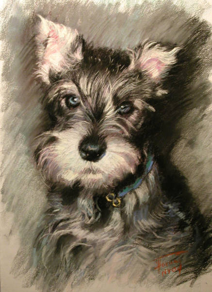 Pet Portrait Wall Art - Pastel - Dog In Blue Collar by Ylli Haruni
