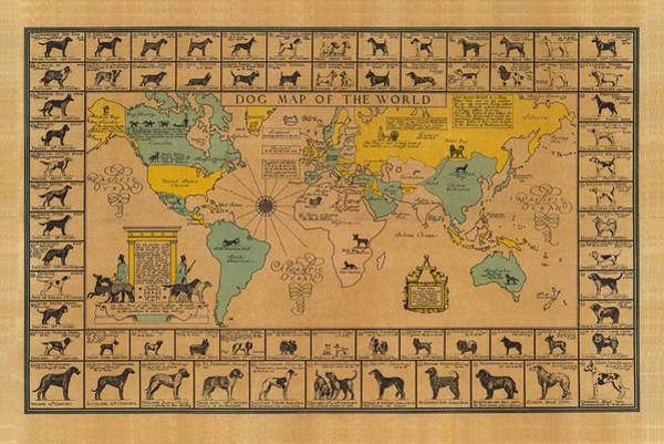 Wall Art - Drawing - Dog Map Of The World - Breeds Of Dogs From Around The World - For Dog Lovers - Antique Chart by Studio Grafiikka