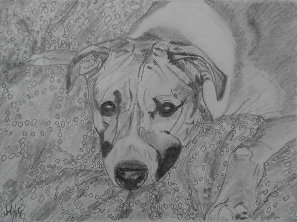 Wall Art - Drawing - Dog by Maria Woithofer