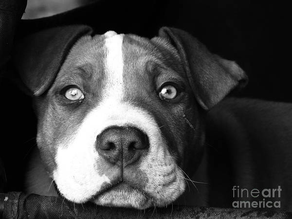 Dog - Monochrome 2 Art Print