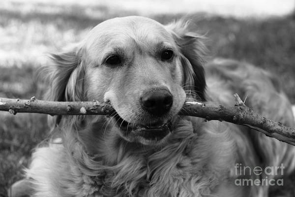 Dog - Monochrome 4 Art Print