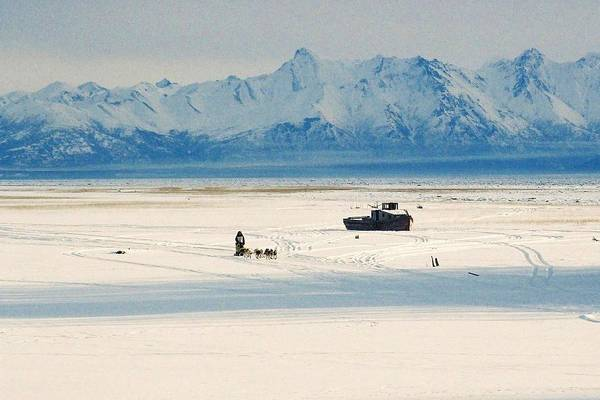 Photograph - Dog Musher At Cook Inlet - Alaska by Juergen Weiss