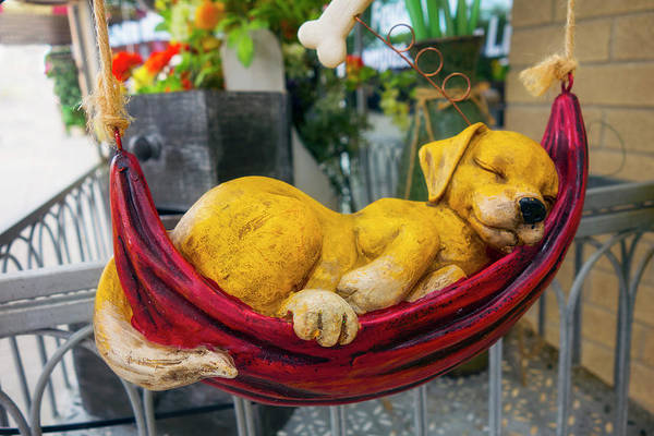 Photograph - Dog Napping Series Y6261 by Carlos Diaz