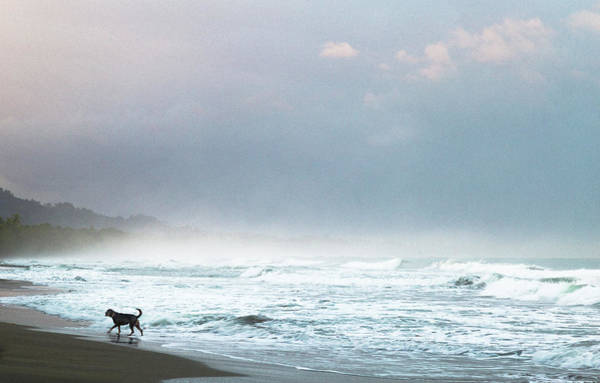 Photograph - Dog On A Costa Rica Beach by Pete Hendley
