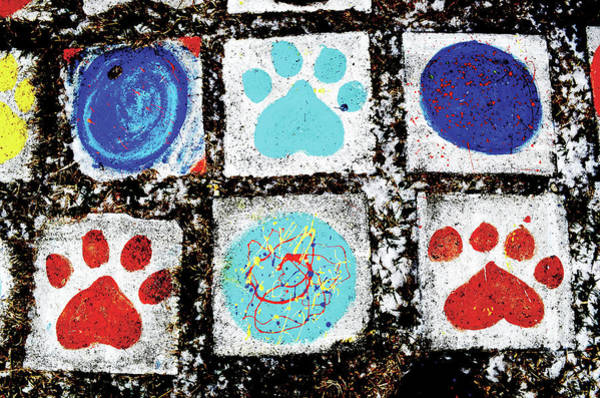 Photograph - Dog Paws by Char Szabo-Perricelli