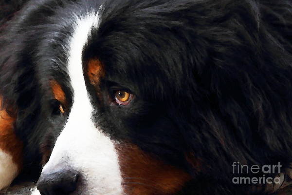 Photograph - Dog . Photo Artwork by Wingsdomain Art and Photography
