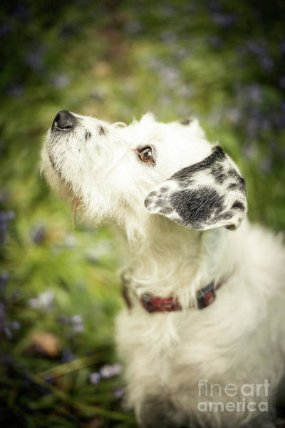 Wall Art - Photograph - Dog Portrait by Amanda Elwell