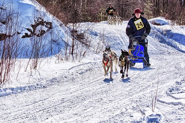 Photograph - Dog Sled Race 2 by Tatiana Travelways