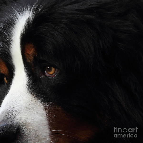 Photograph - Dog . Square . 7d4219 by Wingsdomain Art and Photography
